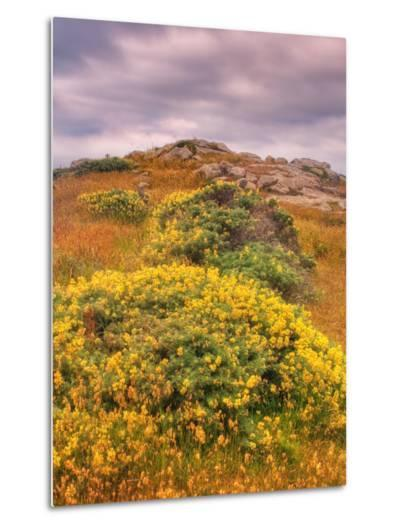 Wildflower Coast-Vincent James-Metal Print