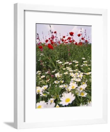 Wildflower Farming on a Kibbutz in Springtime-Richard Nowitz-Framed Photographic Print