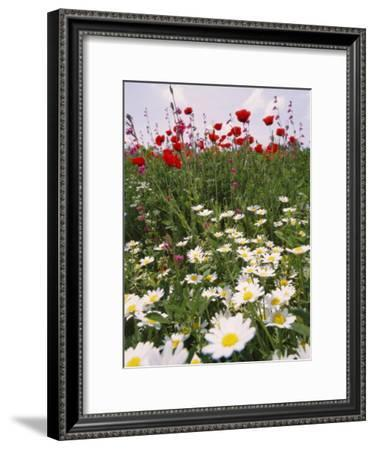 Wildflower Farming on a Kibbutz in Springtime-Richard Nowitz-Framed Photographic Print