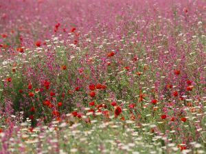 Wildflower Farming on a Kibbutz in Springtime