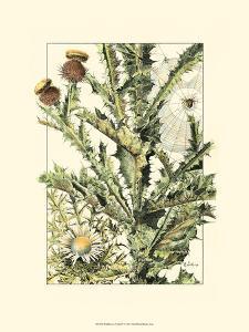 Wildflower Field IV