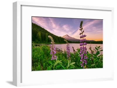 Wildflower Lake, Trillium Lake and Lupine, Mount Hood Wilderness, Oregon-Vincent James-Framed Photographic Print