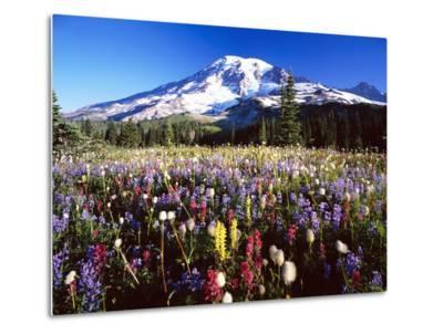 Wildflower Meadow and Mount Rainier-Craig Tuttle-Metal Print