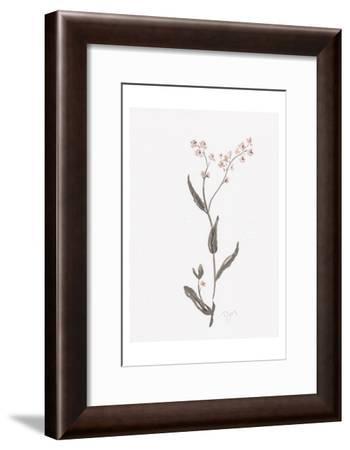 Wildflower Organics I-Beverly Dyer-Framed Art Print