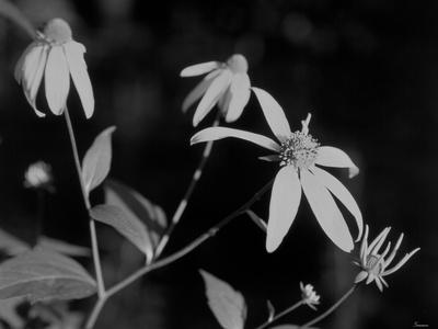 https://imgc.artprintimages.com/img/print/wildflowers-10_u-l-q10pizy0.jpg?p=0