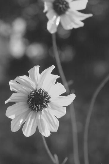 Wildflowers 11-Gordon Semmens-Photographic Print