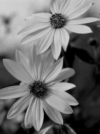 https://imgc.artprintimages.com/img/print/wildflowers-1_u-l-q10pizk0.jpg?p=0