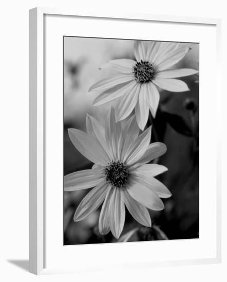 Wildflowers 1-Gordon Semmens-Framed Photographic Print