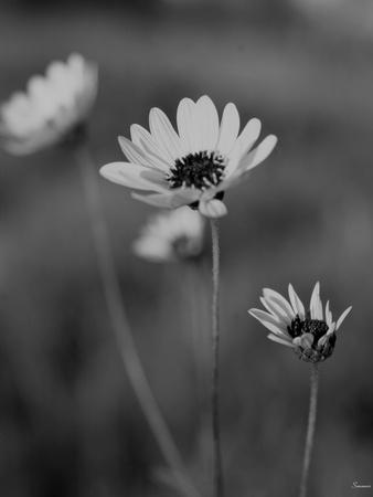 https://imgc.artprintimages.com/img/print/wildflowers-8_u-l-q10piy40.jpg?p=0