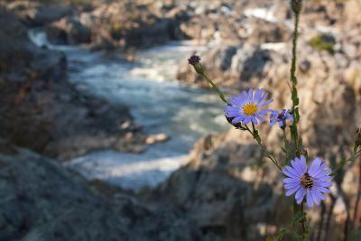 Wildflowers Above the Rapids of Great Falls on the Potomac River-Vickie Lewis-Photographic Print
