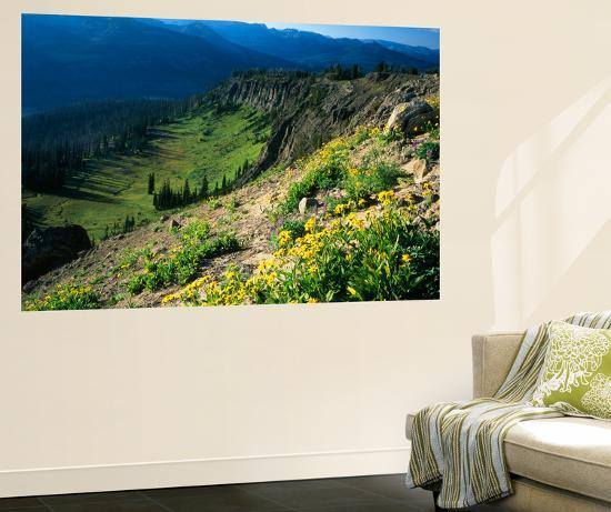 Wildflowers Along Continental Divide, Wyoming, USA-Scott T^ Smith-Giant Art Print