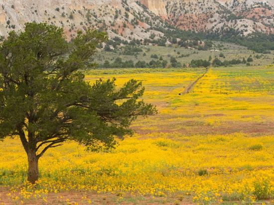 Wildflowers Along Hwy 96, New Mexico-Michael S^ Lewis-Photographic Print