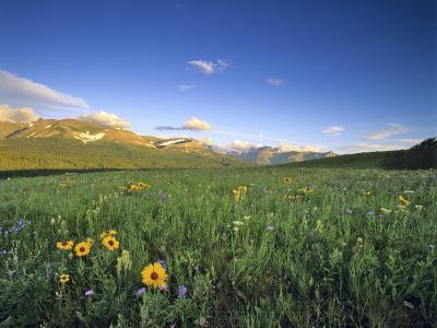 Wildflowers Along Rocky Mountain Front Near Browning, Montana, USA-Chuck Haney-Photographic Print