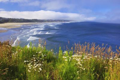 Wildflowers Along Yaquina Head; Newport Oregon United States of America-Design Pics Inc-Photographic Print