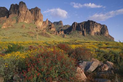 Wildflowers and Cliffs in Desert-DLILLC-Photographic Print