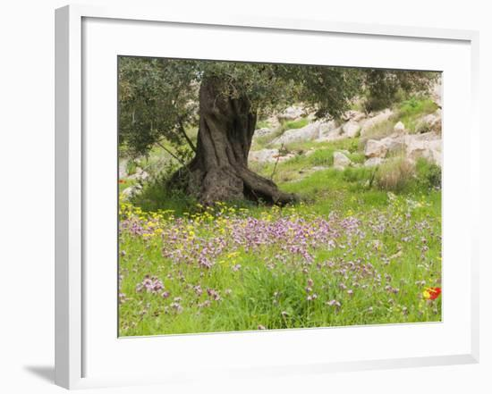 Wildflowers and Olive Tree, Near Halawa, Jordan, Middle East-Schlenker Jochen-Framed Photographic Print