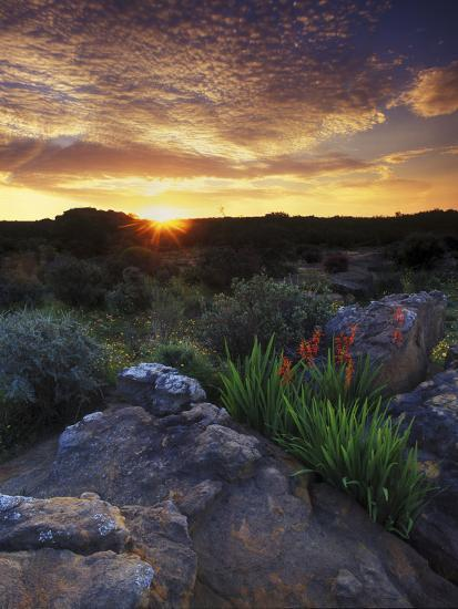 Wildflowers and Sunset at Cederberg Wilderness Area, South Africa-Keith Ladzinski-Photographic Print