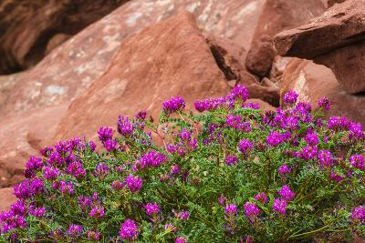 Wildflowers, Canyon De Chelly National Monument, Usa-Russ Bishop-Photographic Print