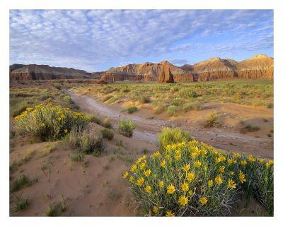 Wildflowers growing along dirt road, Temple of the Moon, Capitol Reef National Park, Utah-Tim Fitzharris-Art Print