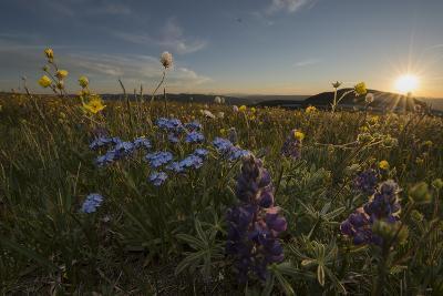 Wildflowers Growing In Wyoming-Joe Riis-Photographic Print