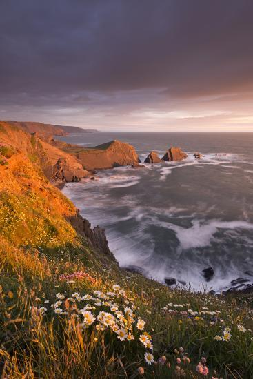 Wildflowers Growing on the Cliff Tops Above Hartland Point, Looking South to Screda Point, Devon-Adam Burton-Photographic Print