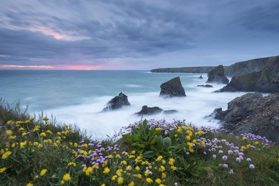 Wildflowers Growing on the Clifftops Above Bedruthan Steps on a Stormy Evening, Cornwall, England-Adam Burton-Photographic Print