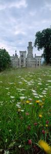 Wildflowers in a field with a castle in the background, Hluboka Castle, Bohemia, Czech Republic