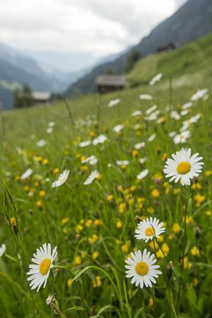 https://imgc.artprintimages.com/img/print/wildflowers-in-a-protected-un-fertilized-meadow-this-valley-is-famous-for-its-biodiversity_u-l-psvtls0.jpg?p=0