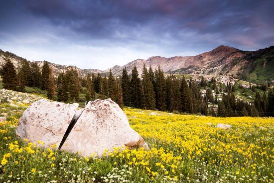 Wildflowers In Albion Basin Little Cottonwood Canyon, Utah-Lindsay Daniels-Photographic Print