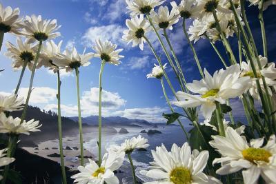 Wildflowers in Bloom Along Coastline-Craig Tuttle-Photographic Print