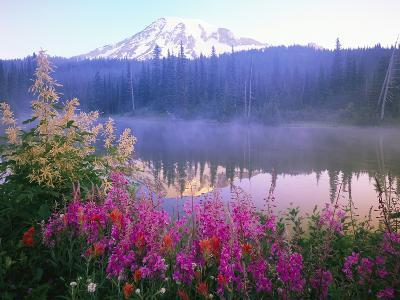 Wildflowers in Bloom by Lake on Mount Rainier-Craig Tuttle-Photographic Print