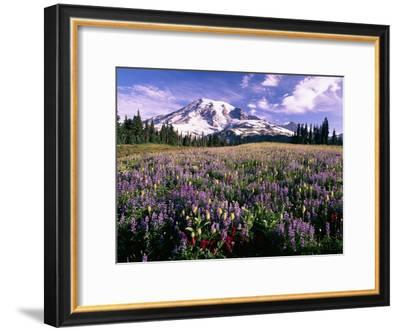 Wildflowers in Mt. Rainier National Park-Stuart Westmorland-Framed Photographic Print