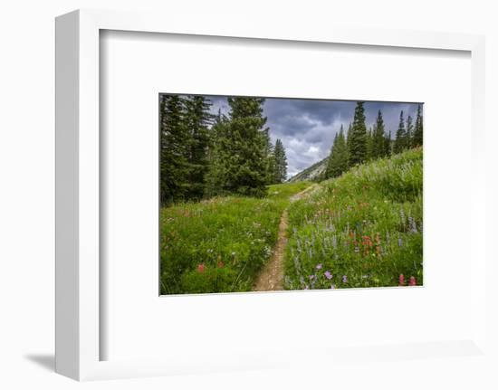 Wildflowers in the Albion Basin, Uinta Wasatch Cache Mountains, Utah-Howie Garber-Framed Photographic Print