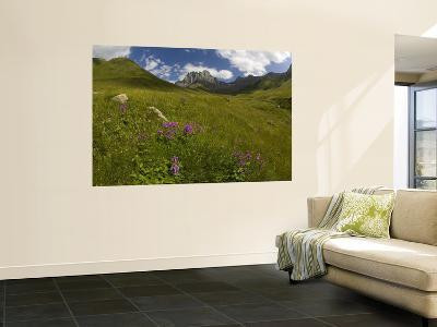 Wildflowers in Valley Beneath Mt Chaukhi-Mark Daffey-Wall Mural