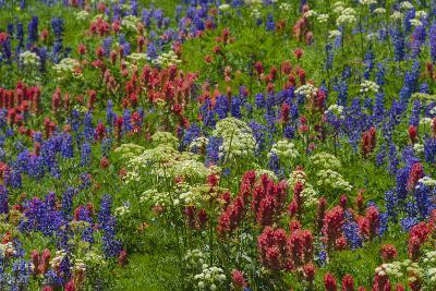 Wildflowers, Mount Timpanogos, Uintah-Wasatch-Cache Nf, Utah-Howie Garber-Photographic Print