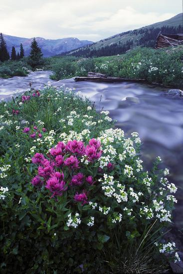 Wildflowers Next to a Stream in Arapahoe National Forest-Keith Ladzinski-Photographic Print