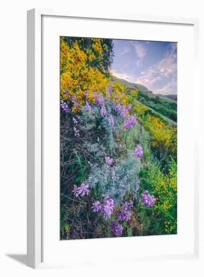 Wildflowers of Oakland in Spring--Framed Photographic Print