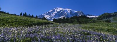 Wildflowers on a Landscape, Mt. Rainier National Park, Washington State, USA--Photographic Print