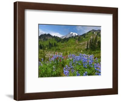 Wildflowers on Meadows, Mount Rainier National Park, Washington, USA-Tom Norring-Framed Photographic Print