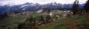 Wildflowers on Mountains, Mt Rainier, Pierce County, Washington State, USA