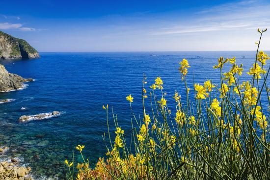 Wildflowers on the Via dell'Amore, Riomaggiore, Cinque Terre, Liguria, Italy-Russ Bishop-Photographic Print