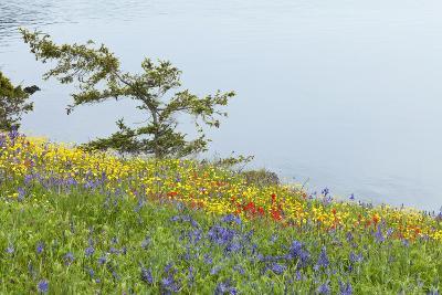 Wildflowers Overlooking Ocean, Yellow Island, Washington, USA-Jaynes Gallery-Photographic Print