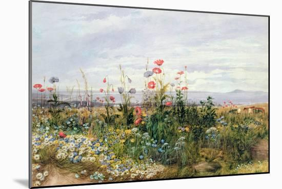Wildflowers with a View of Dublin Dunleary-Andrew Nicholl-Mounted Giclee Print