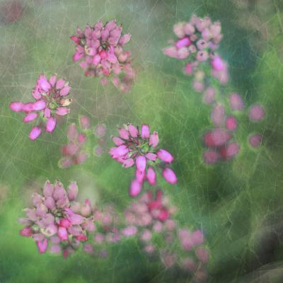 Wildflowers-Viviane Fedieu Daniel-Photographic Print