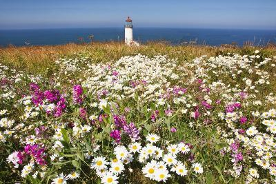 Wildflwers at North Head Lighthouse, Washington State, Pacific Ocean, Pacific Northwest-Craig Tuttle-Photographic Print