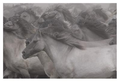 Wildhorses-Dieter Uhlig-Giclee Print