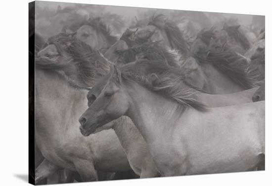 Wildhorses-Dieter Uhlig-Stretched Canvas Print