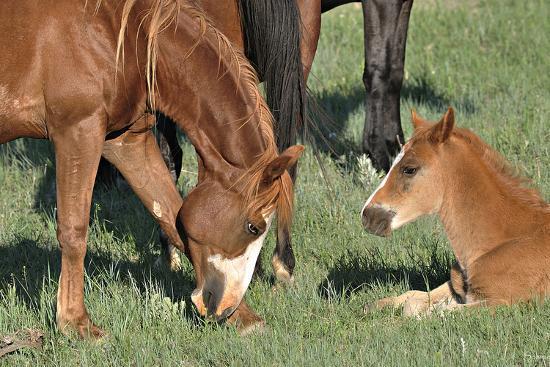 Wildhorses-Gordon Semmens-Photographic Print