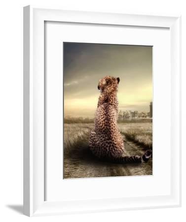 Wildlife African Cheetah-Wonderful Dream-Framed Art Print