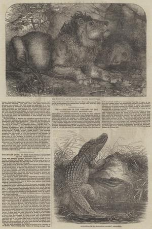 Wildlife at London Zoo--Giclee Print